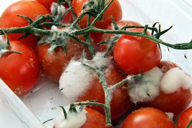 Jakie skutki dla zdrowia może mieć nieprawidłowe przechowywanie żywności?