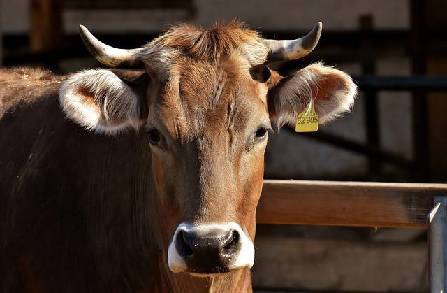 Środki żywienia zwierząt – jakie wyróżniamy? Czy wpływają na jakość mięsa?