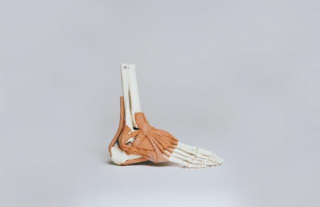 Budowa anatomiczna stopy