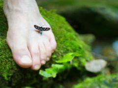 Goła stopa i siedzący na niej owad